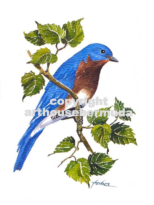 220 Eastern Blue Bird