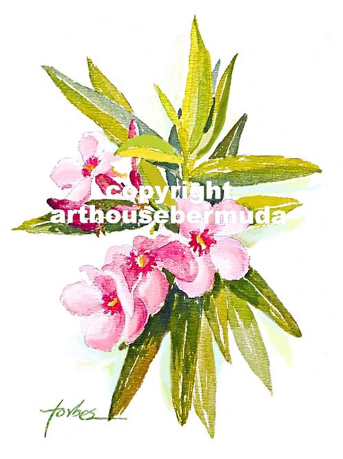207 Oleander