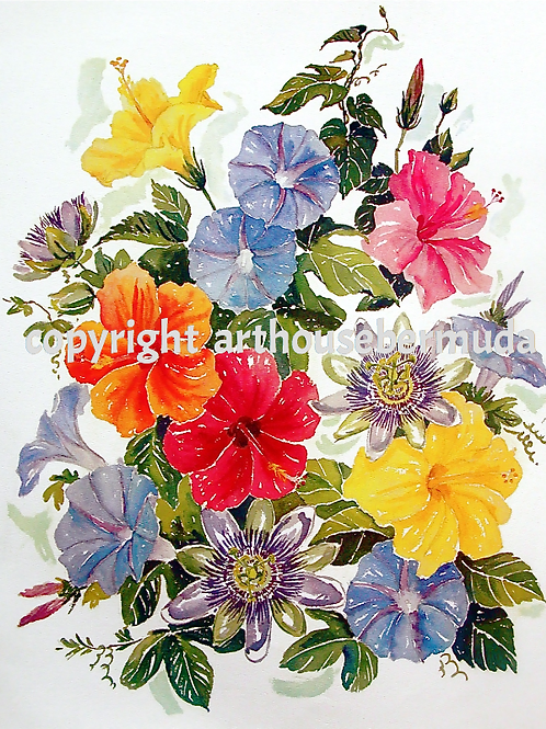 800 Bermuda Floral