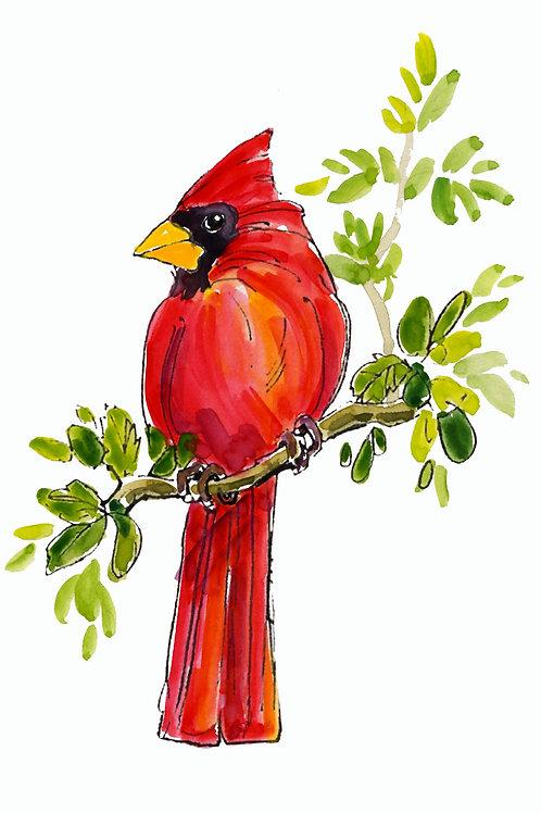 231 Red Bird