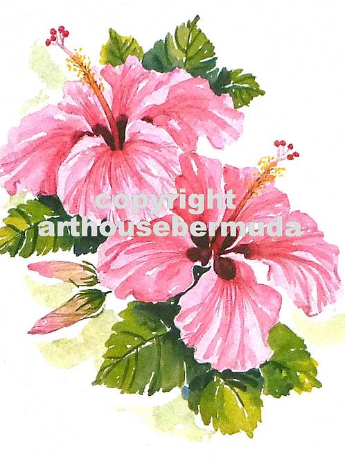 216 Pink Hibiscus