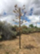 corn pole 2019.jpg