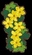image_fleurs.png