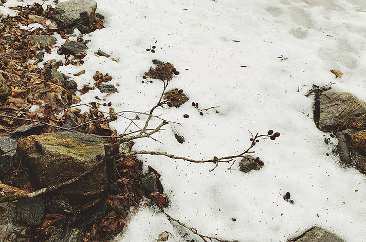 sníh, větve