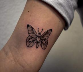Nolan - Butterfly 3.jpg