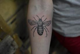 Nolan Bee.jpg