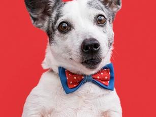 Um empreendimento planejado para você e seu pet: conheça o Ed. La Joie