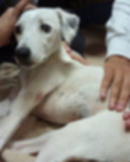 fitoterapia veterinaria holistica el nahual