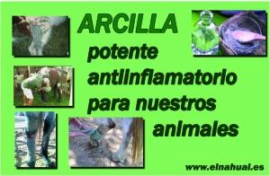 ARCILLA Potente antiinflamatorio para nuestros animales.