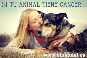 Si tu animal tiene cáncer