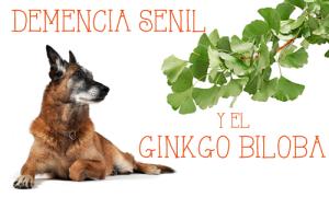 DEMENCIA SENIL: GINKGO BILOBA PARA NUESTROS ANIMALES ANCIANOS.