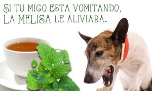 MELISA. PARA ALIVIAR LOS VÓMITOS DE TU ANIMAL
