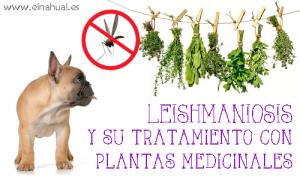 LEISHMANIOSIS Y SU TRATAMIENTO CON PLANTAS MEDICINALES