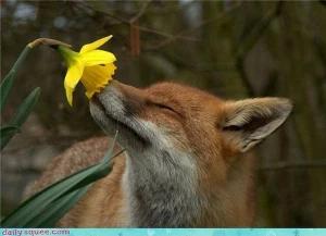 Terapia Floral para Animales