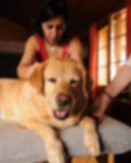 terapia craneosacral veterinaria holistica el nahual