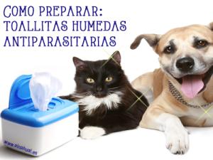 Cómo preparar: toallitas húmedas antiparasitarias