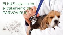 El Kuzu en el tratamiento de la parvovirosis.