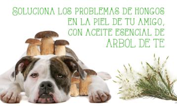 INFECCIONES POR HONGOS Y ÁRBOL DE TÉ EN ANIMALES