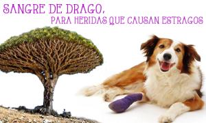 SANGRE DE DRAGO PARA HERIDAS QUE CAUSAN ESTRAGOS