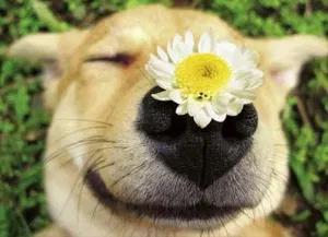 Flores de Bach y otras esencias florales para personas y animales