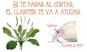 HEMOSTÁTICO NATURAL PARA EL CORTE DE UÑAS DE NUESTROS ANIMALES