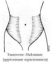 Transverse Abdominal Muscles