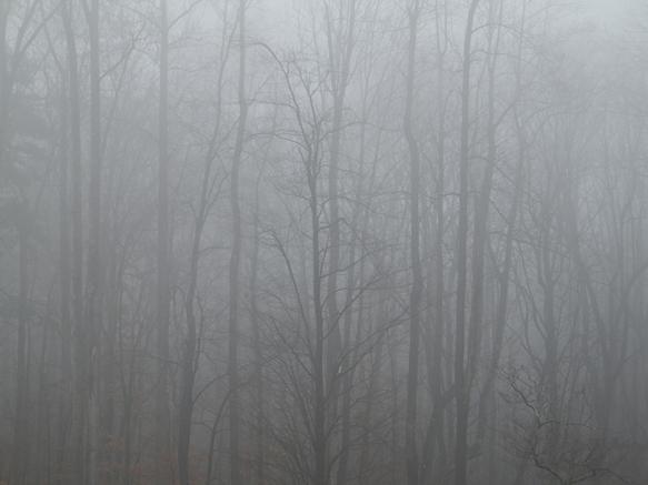 Trees 6 Virginia
