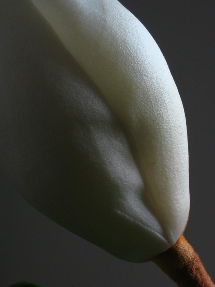 Magnolia 13