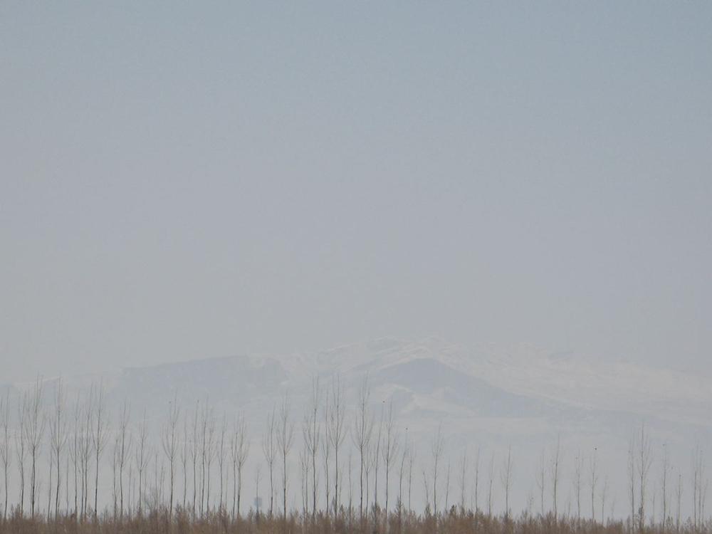 Trees 1 Kyrgyzstan