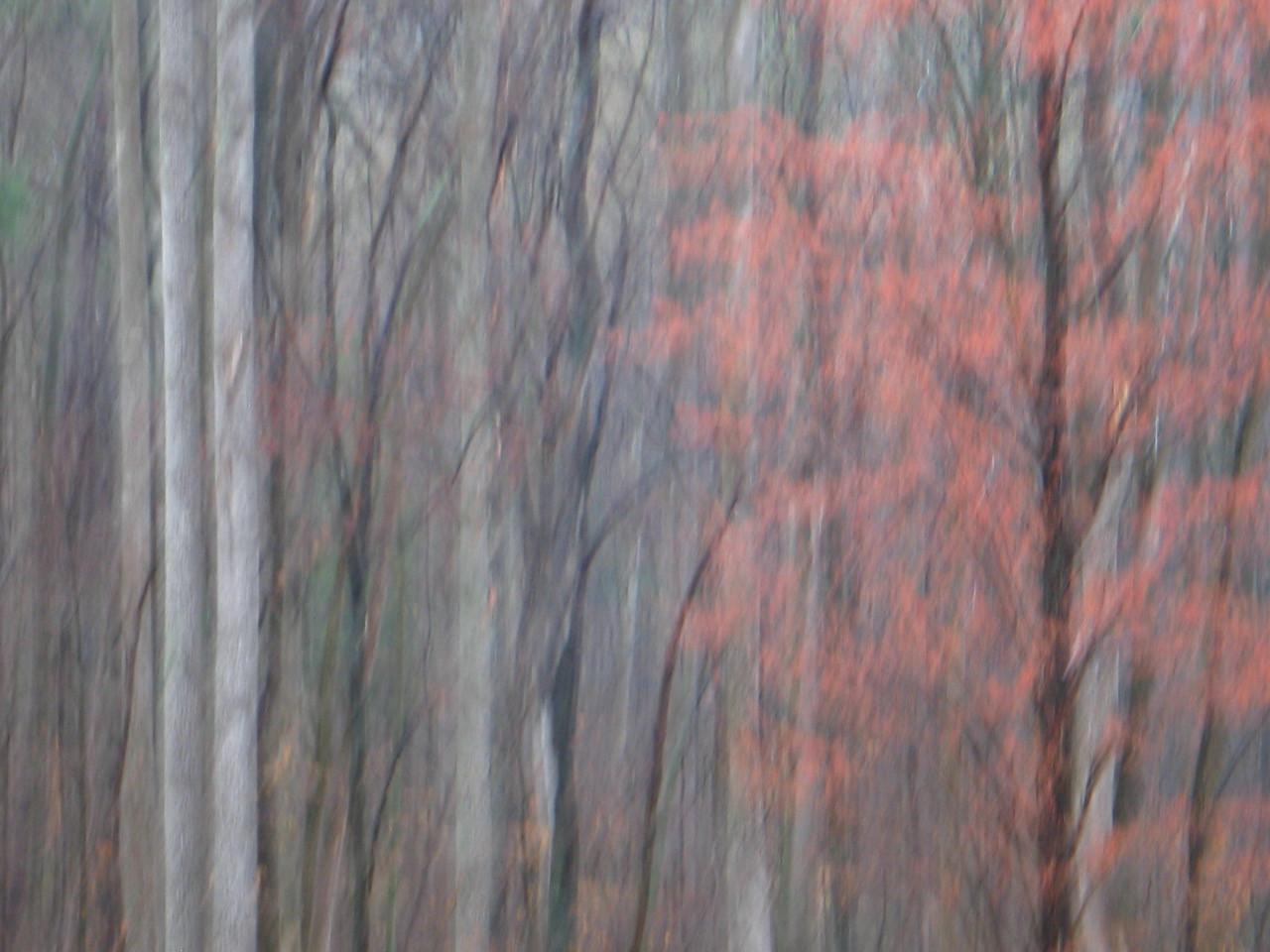 Trees 7 Virginia