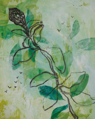 Magnolia Dream