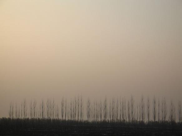Trees II Kyrgyzstan