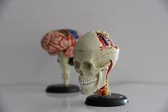 Neuropsicólogo, Neuropscólogo em Bertioga