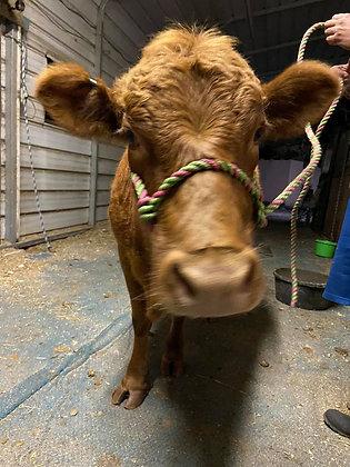 Raw COW Milk (pet consumption only per Florida law)