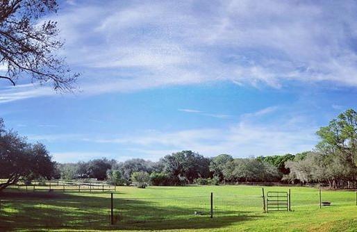 A True Field of Dreams: Serenity Oaks Homestead's Story