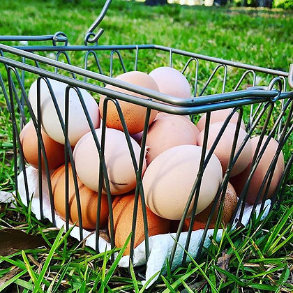 One Dozen Pasture Raised Chicken Eggs