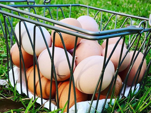 How To Freeze Duck and Chicken Eggs For Later Use