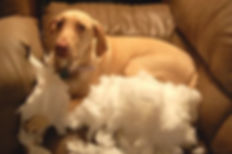 Chewing and destructive behavior is one of the most common reasons pets lose their happy home.