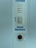 Positive Heartworm test from a dog that has never left Montana.