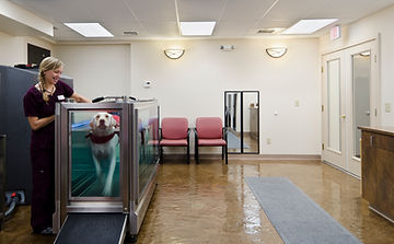 Swimming, water treadmill therapy for dogs and cats.