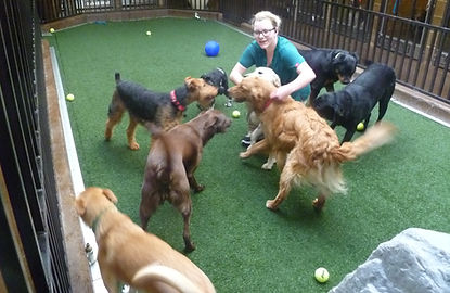 Playtime with friends at Alpine Animal Clinic.