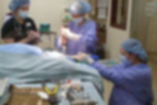 TPLO surgery at Alpine Animal Clinic, Helena, MT
