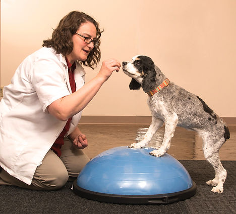 Canine Rehabilitation, acupuncture, laser therapy, hydrotherapy, water therapy, massage therapy, chiropractic therapy