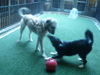 Playing ball with a day care buddy.