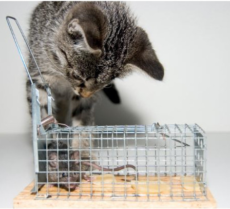 Live mouse trap instead of poison.