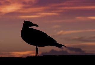 bird-dawn-dusk-37601.jpg