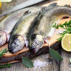 Frische Fische & Meeresfrüchte