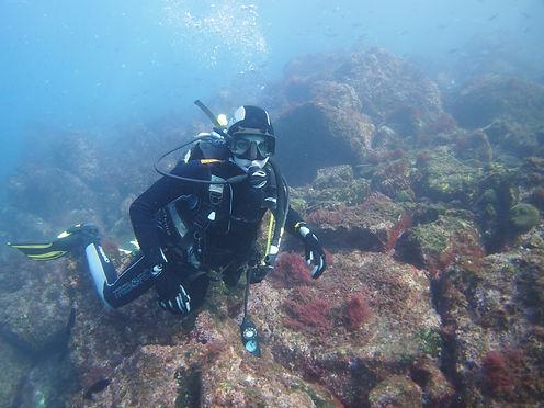 PADI Open Water Scuba Instructor (OWSI) | dive-charters