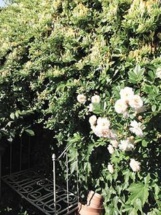 ares-jardin2.jpg