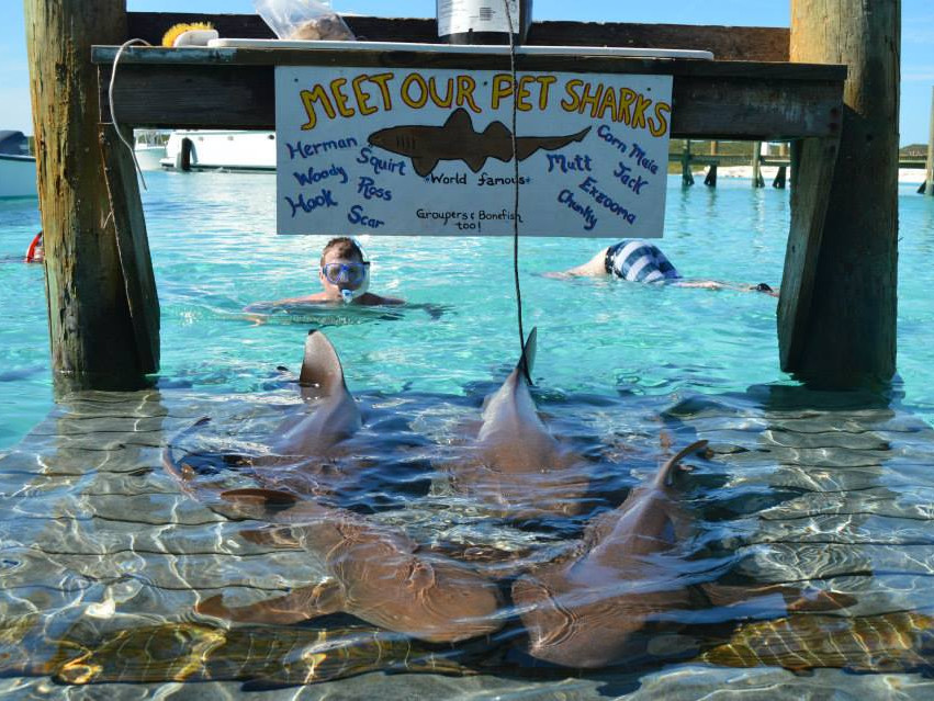 swimming with sharks in best beaches in america